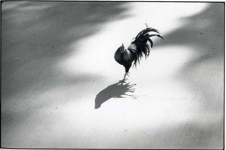 Фотообои черно-белый фотограф фотограф фотообои