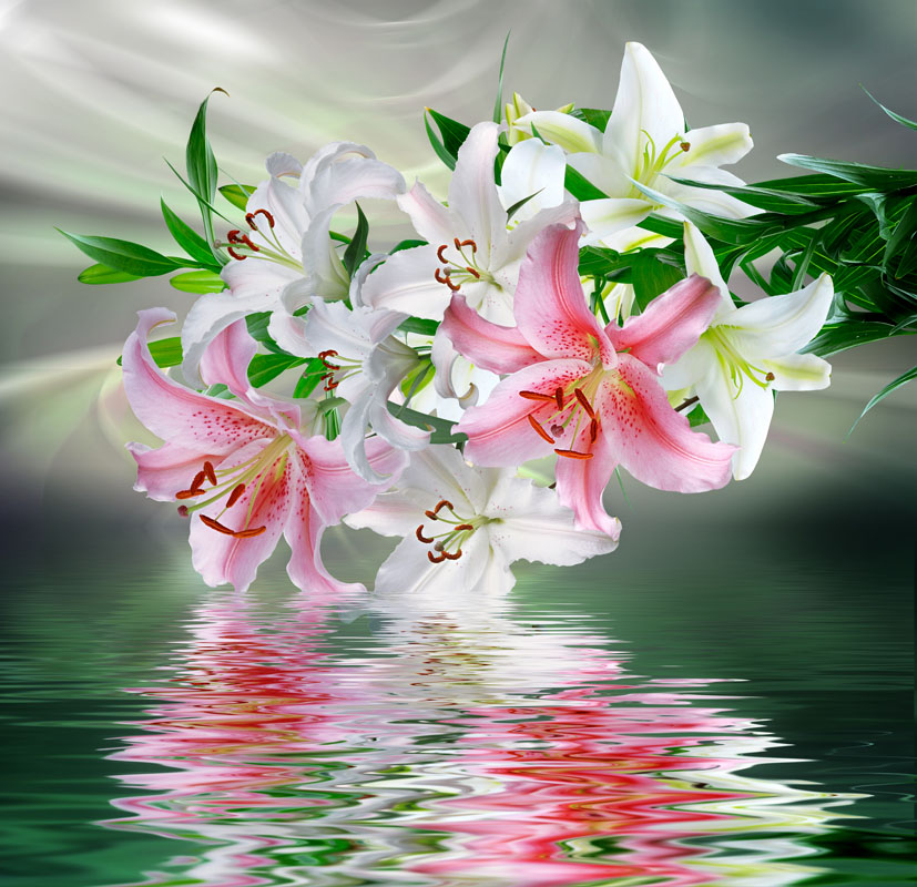 Фотошпалери квіти лілії рожевий білый