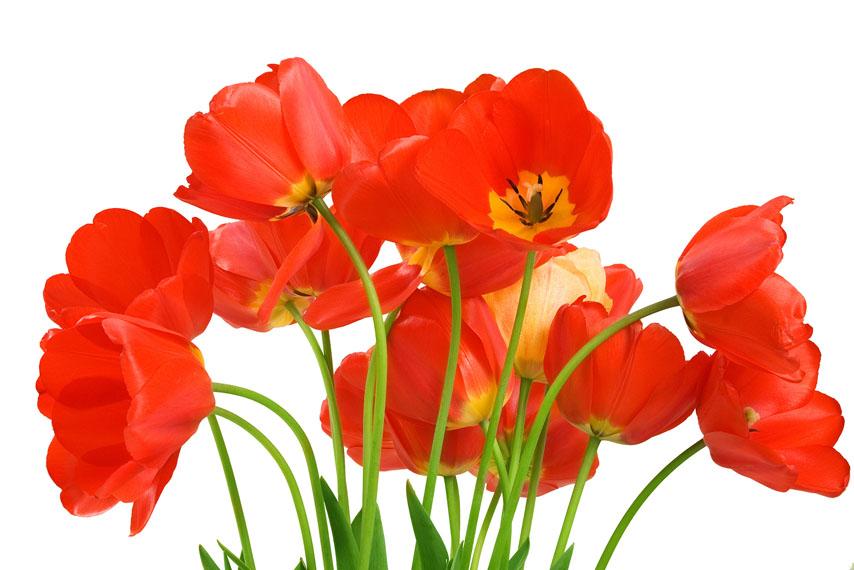Цветы для фона картинки пмг
