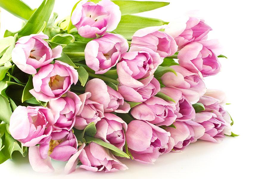 Фотообои цветы, тюльпан, букет, розовый