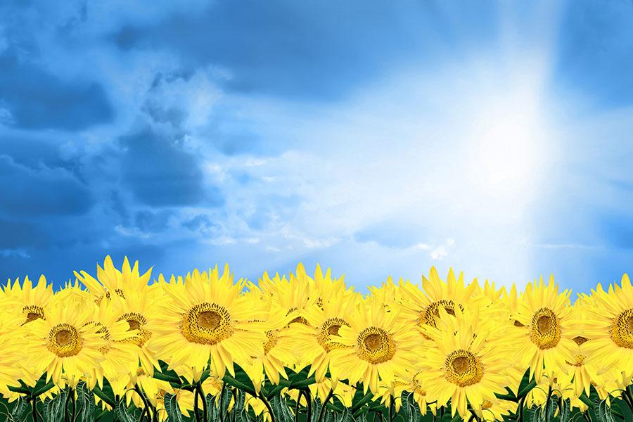 Открытка солнце для небо