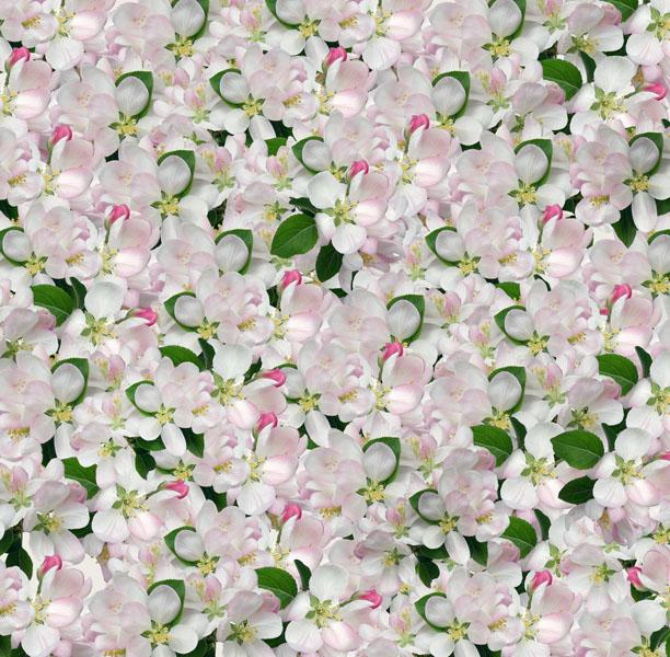 Фотообои цветы яблоня цветущий узор