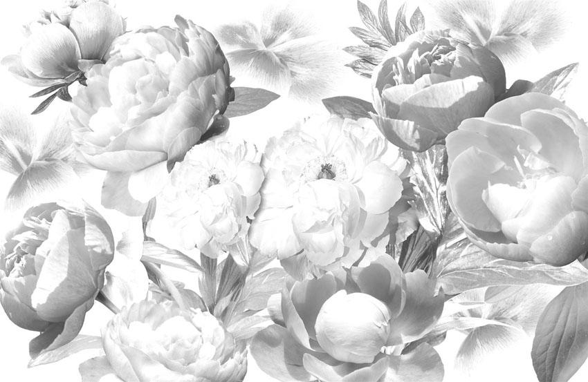 Фотообои цветы пионы черно-белый розы