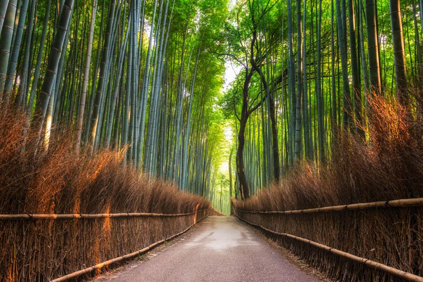 Фотообои лес роща роща зелень