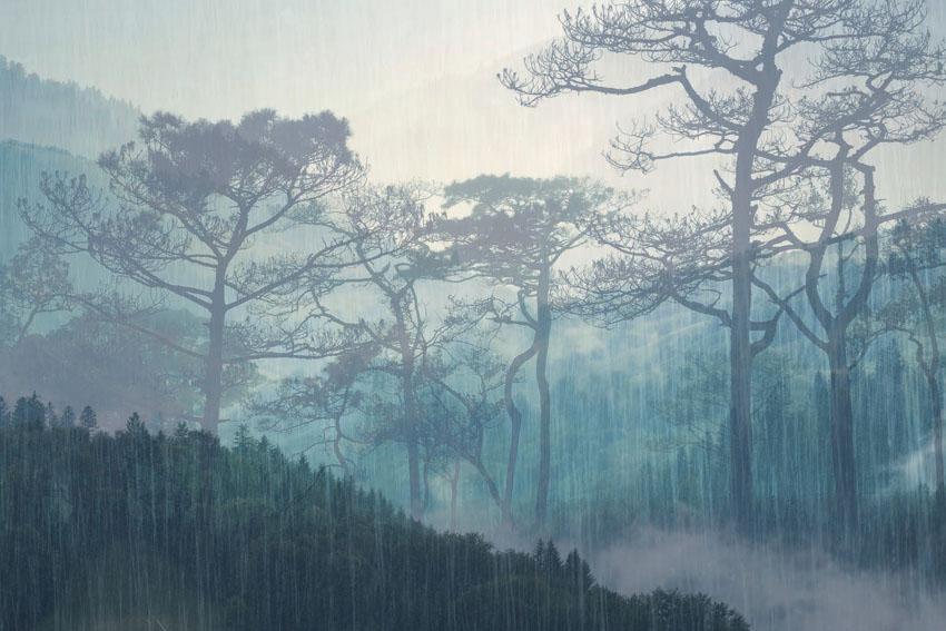Фотообои рельефные 5д лес туман